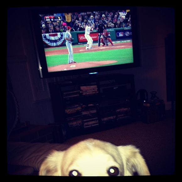 A dog's life - World Series style.....