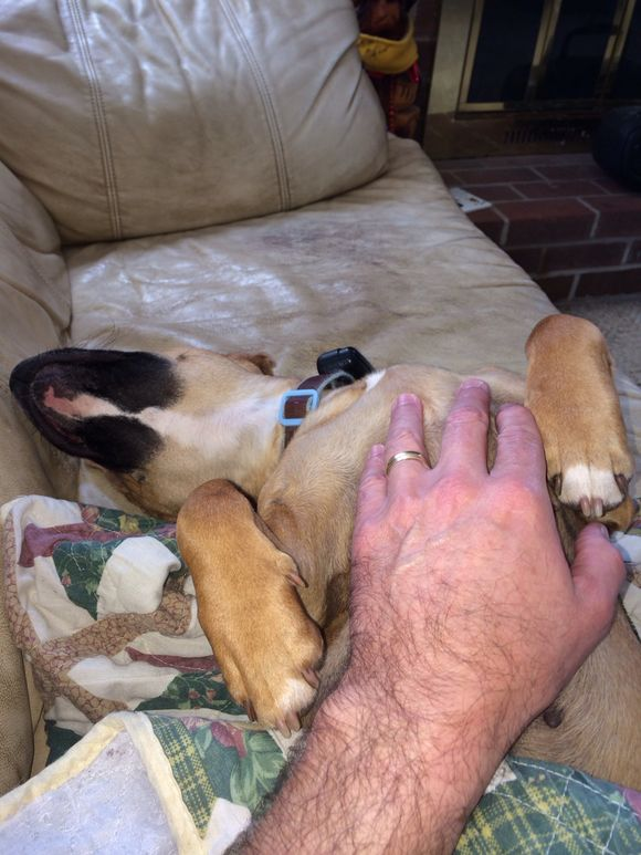 Sweet puppy pics - chilling after a full Spring day of yardwork, barking, running, licking, romping, stomping.....
