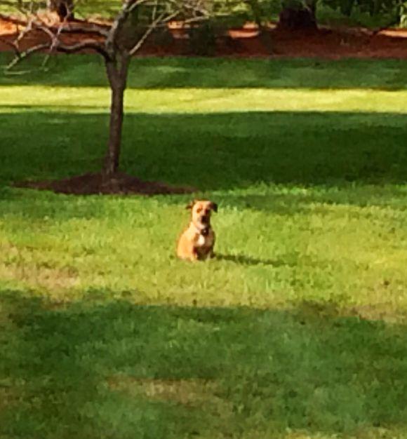 Peanut:  Our lil lawn ornament.....