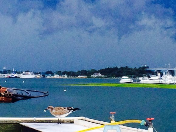 Chasing seagulls - glorious evening at the marina....
