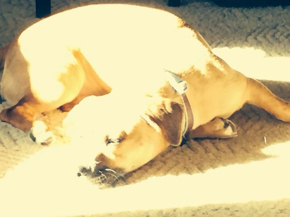 A puppy & a patch of sunshine....